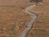 Serengeti Road